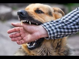 Boynton Beach dog bite lawyer