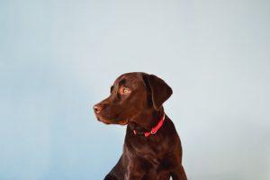 dog bite attorney west palm beach