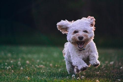 dog bite lawyer Florida